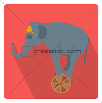 Circus elephant on the wheel icon flat style with long shadows, isolated on white background. Vector illustration.