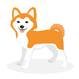 Akita Inu breed dog icon, flat, cartoon style. Cute puppy isolated on white background. Vector illustration, clip-art.