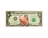pig looks out of one dollar instead the American president isolated