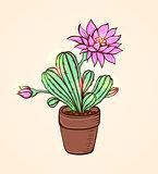 Blooming pink cactus