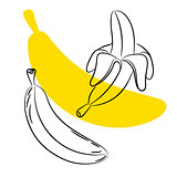 Sketch banana fruit vector.