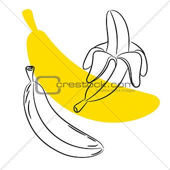 Sketch banana fruit vector.