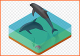 sealife vector illustration