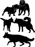 dogs. Dogs black silhouette isolated. Bulldog. pug. Shepherd. Like. Malamute