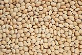 Bitter neavy beans background