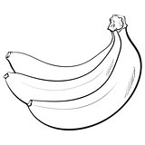 Bunch of three unopened, unpeeled ripe bananas, sketch vector illustration