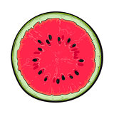 Half of ripe watermelon, top view sketch style vector illustration