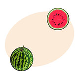 Whole striped watermelon and cut in half, sketch illustration