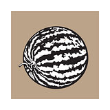 Perfect whole striped watermelon with curled up tail, sketch illustration
