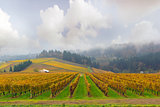 Dundee Oregon Vineyard During Fall Season