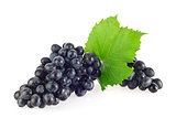 Bunch of blue organic grapes with green leaf.