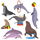 Marine circus animals set. Vector illustration. Flat.