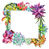 Wildflower succulentus flower frame in a watercolor style isolated.