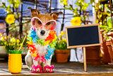 dog summer holiday vacation on balcony