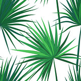 Tropical background with jungle plants. Seamless vector tropical pattern with green sabal palm leaves.