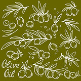 set of graphic olive branches