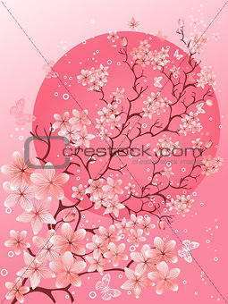 Beautiful spring. Cherry blossom background