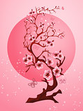 Cherry blossom background. Beautiful spring nature scene