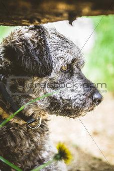 Small dog in garden