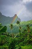Rainbow on Moorea island jungle and mountains landscape
