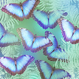 beautiful bright butterflies