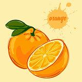hand draw of orange