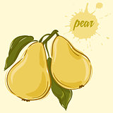 hand draw of pear