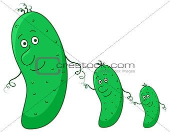 Cucumbers, family