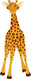 Giraffe cartoon style, vector illustration.