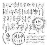 Hand drawn line floral elements . Big set