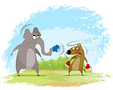 Elephant and wolf boxing