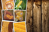 Corn maize in agriculture, photo collage