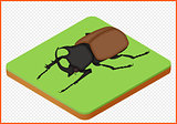 beetle vector eps