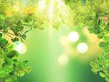 3D leaves on bokeh light background