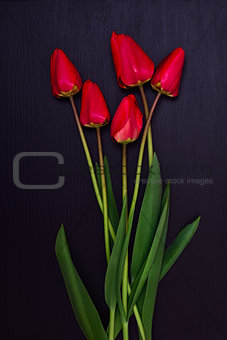 bouquet of red unblown tulips