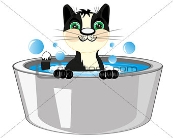 Cat is washed in basin
