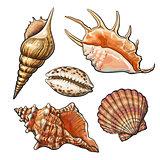 Set of various beautiful mollusk sea shells, isolated vector illustration