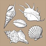 Set of various beautiful mollusk sea shells, isolated vector illustration