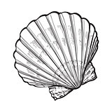 saltwater scallop sea shell, isolated sketch style vector illustration