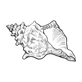 spiral conch sea shell, isolated sketch style vector illustration