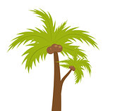 Palm tree. icon flat, cartoon style. Summer, beach concept isolated on white background. Vector illustration, clip-art.