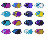 Fish colorful set. Hand drawing. Vector illustration.