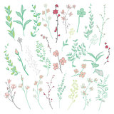 Vector Colorful Drawn Herbs, Plants and Flowers.