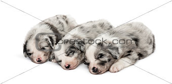 Group of crossbreed puppies sleeping isolated on white