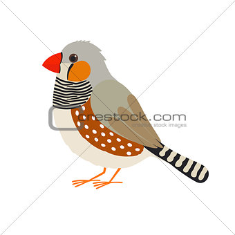 Australian zebra finch. Vector bird.