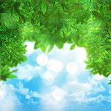 3D leaves on blue sky background