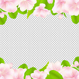 Apple Tree Flowers With Frame