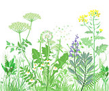 Herbs and wild flowers. Botanical Illustration