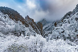 View of the frozen forest in Huangshan National park.