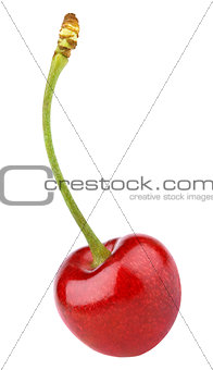Single red cherry berry isolated on white